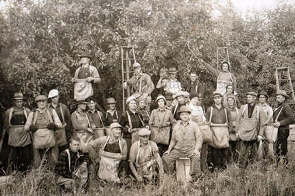 orchard picking crew spokane valley