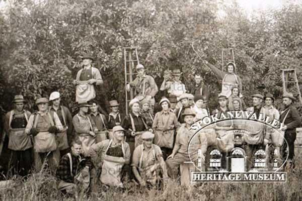 twenty member picking crew standing in front of a fruit tree